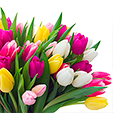 Bouquets_Tulips_Many_474704