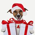 Dog-Christmas-gift-wallpapers132014_grande